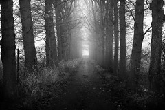 dark road (opdrie) Tags: autumn trees sky blackandwhite bw mist nature netherlands dutch misty fog rural dark vanishingpoint farm perspective fl shadesofgrey depth