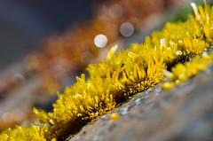 Sin meter mano-Tom (Pancolorous) Tags: naturaleza verde planta mar flora playa roca algas