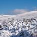 Neve no Parque Natural do Alvão -19