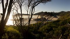 Surprise Bay, South Coast Track