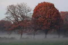 Arbre (rogermarcel) Tags: mist color tree landscape paysage arbre brume mygearandme rogermarcel
