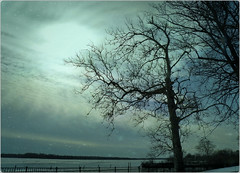 Cold Day by the Delaware (MissyPenny) Tags: blue winter tree philadelphia water river pennsylvania delawareriver blueandblack pdlaich missypenny