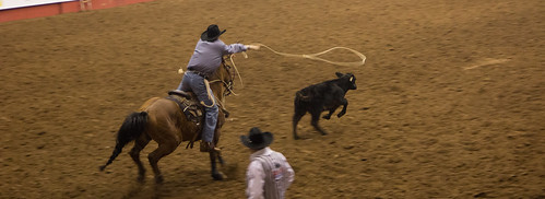 Calf Roping @ San Angelo Stockshow & Rodeo