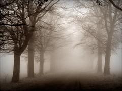 Misty alle du chteau (april-mo) Tags: mist france misty fog