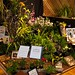 Lico Orchids – Best Exhibit in a Natural Setting