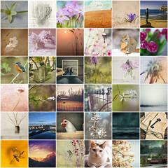 i love your work 31 (*silviaON) Tags: friends collage mosaic favorites april 2014