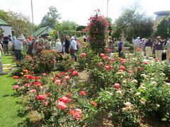 Garden of Sheenagh Harris