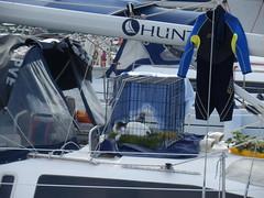 Tiere an Bord (hardy2408) Tags: segeln sporaden