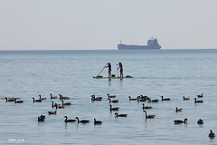 Paddle boarders, geese and tanker. (Gillian Floyd Photography) Tags: girls canada water girl geese paddle tanker boarder