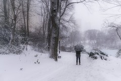 Man & Snow (karinavera) Tags: travel sonya7r2 day man centralpark umbrella storm newyork people snow city snowing