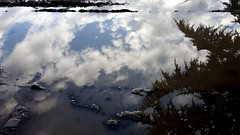 Scattered clouds (rve13) Tags: seattle interstate5 puddle galaxys6 clouds