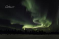 _64A1342 (Ed Boudreau) Tags: alaska northernlights auroraborealis nightphotography nightsky stars aurora winter winterscene winterscape landscape alaskalandscape landscapephotography auroratrapperscreek petersvillerd auroracolors