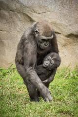 """ Girl's Stick Together! "" (ToddLahman) Tags: joanne leslie westernlowlandgorilla gorilla babygorilla baby canon7dmkii canon canon100400 sandiegozoosafaripark safaripark mammal"
