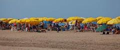 IMG_6250 Yellow beach umbrellas (Rodolfo Frino) Tags: beach beachumbrella yellow blue sand arena cielo ciel sky people gente bright summer summertime gold