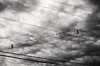 Sixteen Birds (MikeSpeaks) Tags: birds telephonewires sky clouds blackandwhite bnw moody