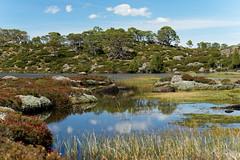 20170301-29-Light alpine scrub (Roger T Wong) Tags: australia greatpinetier np nationalpark sel70300g sony70300 sonya7ii sonyalpha7ii sonyfe70300mmf2556goss sonyilce7m2 tasmania wha wallsofjerusalem worldheritagearea bushwalk camp hike pool reflections tarn trektramp walk water
