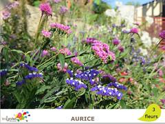 aurice2 (Tourisme Landes) Tags: landes fleurs vvf