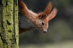 Hello,what a beautiful day. (eowina) Tags: squirrel squirrels nature animals pets portrait