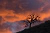 Hillside Under a Blazing Sky (rwbaldwin) Tags: colorado rockymountains rwbaldwin salida spring approachingstorm sunrise landscapes thirtyninemilevolcanicfield