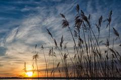 Müritz (Melanie Tomischat) Tags: müritz sunset sonnenuntergang landschaft landscape wolken clouds