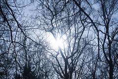 Sun Is Beautiful (eskayfoto) Tags: canon eos 700d t5i rebel canon700d canoneos700d rebelt5i canonrebelt5i alderleyedge cheshire sk201703279210editlr sk201703279210 lightroom branch branches light sun shines shining
