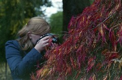Erica (dichohecho) Tags: trees red film analog japanesemaple acer analogue pentaxmesuper fujisuperia400 westonbirtarboretum ubuphotosoc roll59 dichohecho