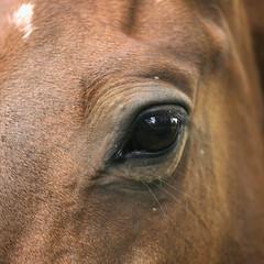 Horse Eye (Adam Swaine) Tags: county uk england horses macro english beautiful animals rural canon photography countryside britain east counties naturelovers lincs 24105mm swaine 2013 thisphotorocks adamswaine mostbeautifulpicturesmbppictures wwwadamswainecouk