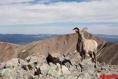 (thomasjjaramillo) Tags: mountains newmexico southwest west 50mm hiking wildlife summit wheeler taos wilderness wheelerpeak newmexcio