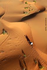 بين الرمال (adel almulhem) Tags: بين الرمال