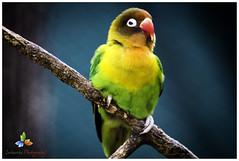 Parrot (Sriharsha) Tags: india birds canon photography zoo parrot hyderabad 600d 2013