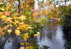 Autumn Leaves III (Joe Josephs: 2,600,180 views - thank you) Tags: newyorkcity autumn fall landscape fallcolor centralpark fallfoliage landscapephotography urbanparks joejosephs copyrightjoejosephsphotography copyrightjoejosephs2013 sonyrx1r