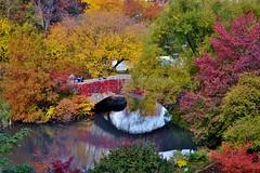 Central Park-Gapstow Bridge, 11.02.13 (gigi_nyc) Tags: nyc newyorkcity autumn leaves centralpark autumnleaves autumncolors fallfoliage thepond leafpeeping thisisnewyorkcity