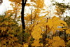 Bellevue State Park (Phil Roeder) Tags: autumn fall iowa mississippiriver bellevue canon15mmf28
