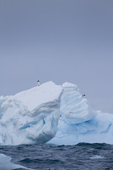 Antarctica - Day Two0316 (GLRPhotography) Tags: brown penguin antarctica 400 iceberg bluff adelie 100400 over200