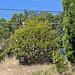 Trees_of_Loop_360_2013_135