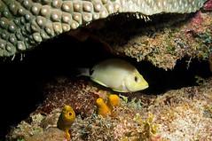DSC03382a (rwe0207) Tags: scuba diving floridaeverglades pompanobeach underwaterphotography bigcypruspark