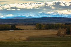 Late fall pastoral landscape; Calgary outskirts, AB (Martin Thielmann) Tags: ab rockymountains haybales pasturelands deciduouswoodlands westofcalgaryoutskirts latefalllandscape nearspringbankroad