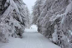 Winterwald (mikiitaly) Tags: schnee winter italy snow day wald bume sdtirol altoadige autofocus wipptal rosskopf sterzing eisacktal bestcapturesaoi ruby10 pwwinter
