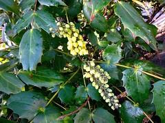 Ne (Julie70 Joyoflife) Tags: flowers london spring fevrier photostroll photojuliekertesz midfebruary springwalksinlondon springflowersinfebruary