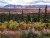 Alaska autumn: Off Hwy 1 to Wrangell-St. Elias (Ron Reason) Tags: blue autumn red orange lake flower tree yellow alaska highway1 shrub