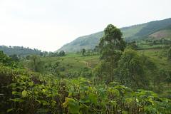 DSC08180. Kulturlandskap, Bwindi, Uganda, Mahogany Springs. (Berit Christophersen) Tags: africa travel landscape uganda bwindi sonyalpha mahoganysprings