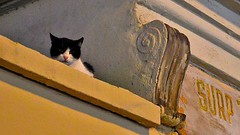 Kitty on the wall (Ali Enes M.) Tags: life new city travel cat turkey photography nikon trkiye kitty istanbul an fresh traveller trkei moment 1855 dslr kedi hayat armenian kadky kilise yaam fotoraf seyahat turecko ar ermeni surp seyyah ehir kedicik konstantiniyye alienes d5100 alienesmollaolu alienesm