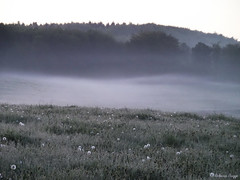Early morning fog (DameBoudicca) Tags: morning maana fog nebel sweden schweden meadow wiese sverige prado prairie nebbia morgen prato niebla brouillard suecia matin morgon mattino dimma sude  svezia    ng kard