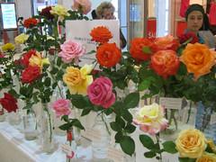 Bloemfontain Rose Show