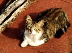 Gatos en las azoteas!!! (@Maphe) Tags: gatos
