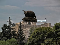 Ein dicker Brocken / A Big Chunk (Maxum1201) Tags: greek nest geier akropolis grichenland pleitegeier