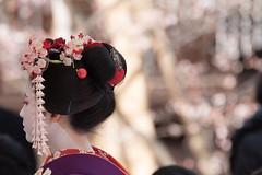 DSC_5680-1 (kikukudo) Tags: 梅花祭野点大茶湯 北野天満宮 上七軒 舞妓 kyoto maikosan