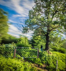 (mblsha) Tags: tree green fence saintpetersburg panning icm intentionalcameramovement backwardpanning fujifilmx20