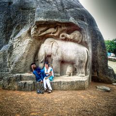 Half an elephant