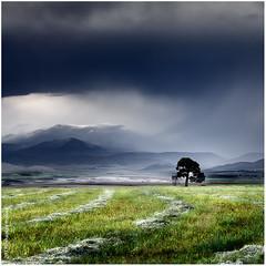los royos II (muliterno) Tags: campos losroyos
